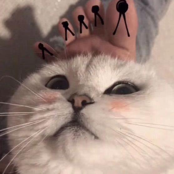 【美化求助】求助,谁还有这个猫的另外一个情侣头像啊!-100tui.cn