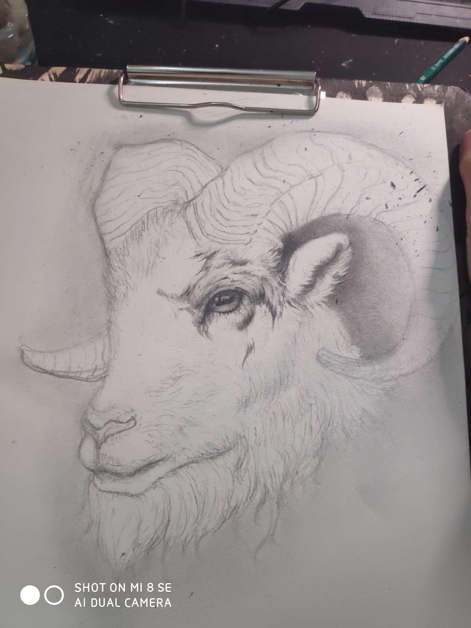 【手绘】素描羊,二次元被吸奶漫画图片