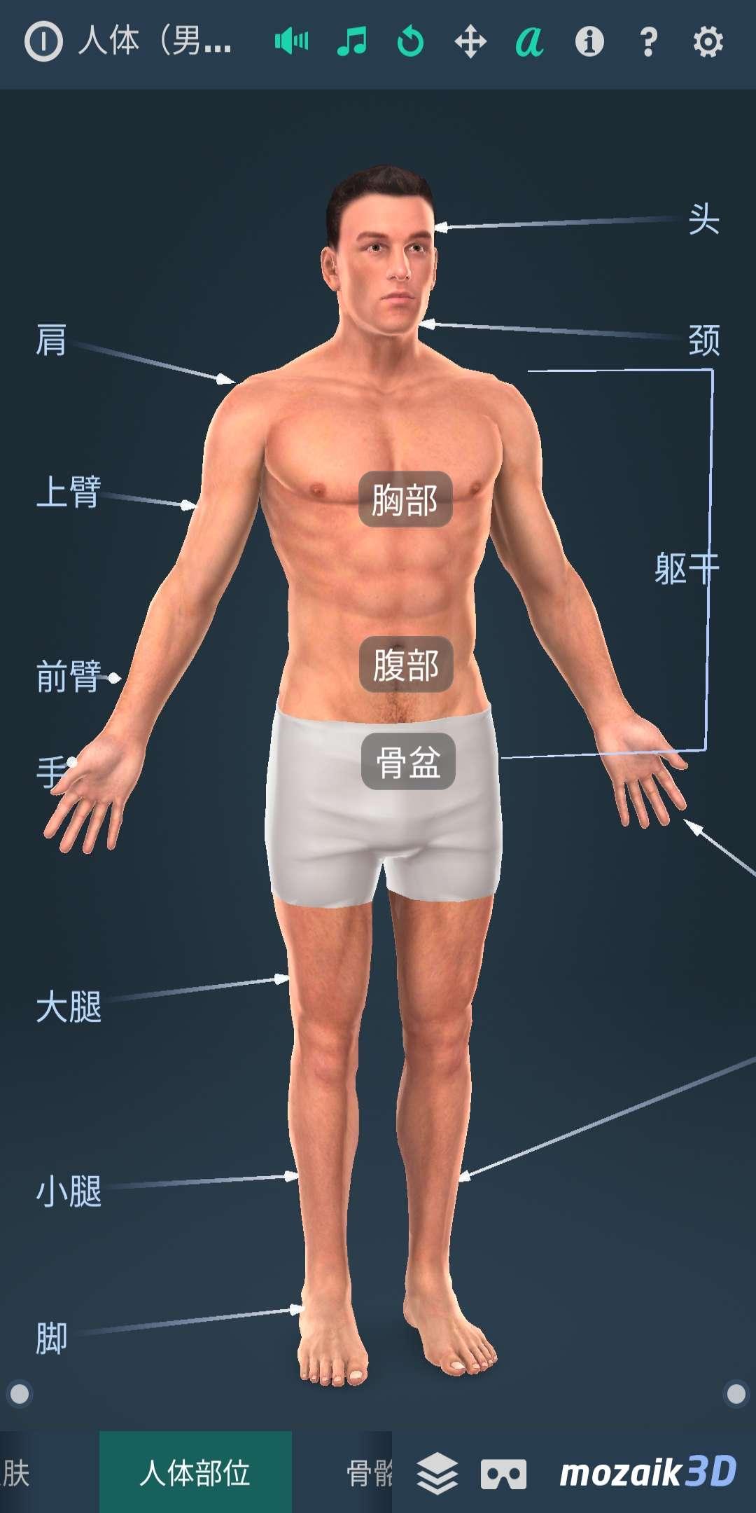 【分享】Human body (male)(人体系统男性3D)