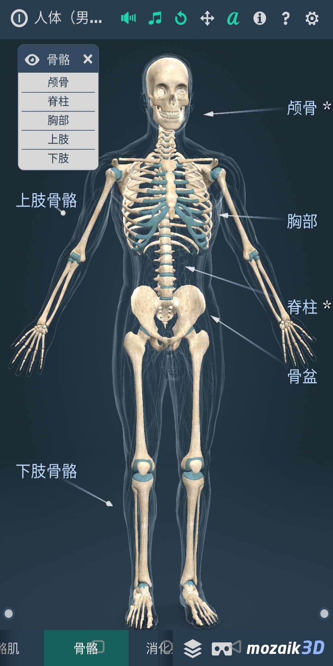 【分享】Human body (male)(人体系统男性3D)-爱小助